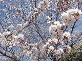 お花見 (3).jpg