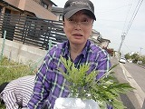 よもぎ収穫 (8).jpg