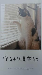 8月のイメージカード.jpg
