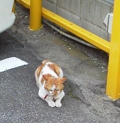 駐車場の猫.jpg